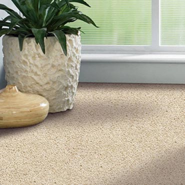 Shaw Carpet Bellera Collection | Glastonbury, CT